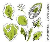 salad leaves and herbs  lettuce ... | Shutterstock .eps vector #1704996808