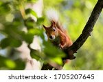 Squirrel On A Tree Branch Close ...
