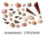 set of seashells isolated on... | Shutterstock . vector #170525696