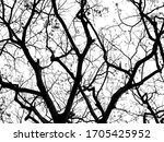 Dried Branches Of Giant Tree...