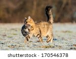 Mother Cat Running With Newborn ...
