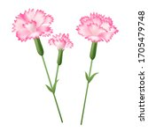 hand drawn realistic pink... | Shutterstock .eps vector #1705479748