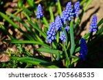 Macro Photo Spring Plant Flowe...