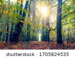 Autumn Forest On A Sunny Day....