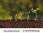New Seeds Of Pea Growing In Soil
