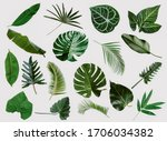 Small photo of More beautiful exotic tropical leaves, isolated leaf background