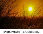 The Evening Sun Shining Throug...