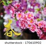 Cherry Blossom  Selective Focu...