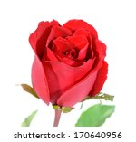 beautiful rose isolated on... | Shutterstock . vector #170640956