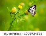 Beautiful Butterfly Sitting In...