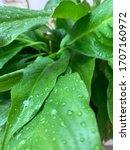 Closeup Photo Showing Rain...