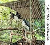 Two Marabou Stork Behind Bars...