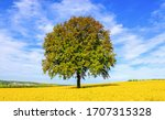 Lonely Tree In Yellow Meadow...