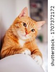 Funny Ginger Cat Looking At The ...