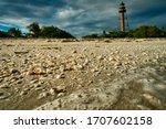 Shells On Sanibel Island With...