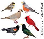 common north american birds as...   Shutterstock .eps vector #1707851578