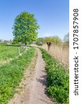Small photo of Dutch portrait landscape with a small trail, pollard willow and a oak tree along a dyke