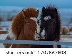 Portrait Shot Of Two Horses ...