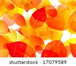 autumn colorful leaves | Shutterstock . vector #17079589