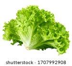 Salad  Lettuce  Isolated On...