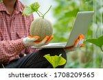 Farmer Check Melon Quality In...
