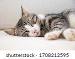 Beautiful Cat Sleeping On A...