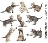 Stock photo tabby kittens isolated collection 170824478
