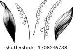 convallaria majalis. flowers... | Shutterstock .eps vector #1708246738