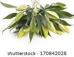 bouquet of white lilies  | Shutterstock . vector #170842028