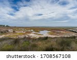 Wetlands Landscape With Aquati...