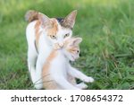The Female Cat Mother Brings...