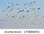 Flocks Of Seagull Under Blue Sky