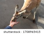 Feeding An Australian Red Giant ...