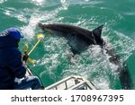 A Crew Member Lures And Holds A ...