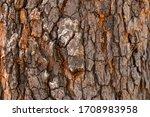 Tree Bark Texture In Warm...