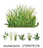 Realistic Grasses Mix And...