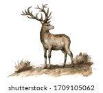 Watercolor Brown Deer And Field ...