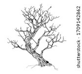 hand drawn tree isolated on... | Shutterstock .eps vector #1709142862