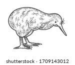 kiwi bird sketch engraving...   Shutterstock .eps vector #1709143012