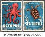 Sea Turtle  Octopus  Crab And...