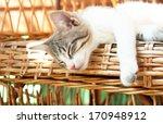 Stock photo small kitten sleeping on the wooden armchair 170948912
