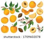 apricot of fruit vector cartoon ... | Shutterstock .eps vector #1709602078