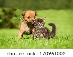 Stock photo little puppy with tabby kitten sitting on the grass 170961002