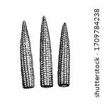 baby corn. ink sketch of... | Shutterstock .eps vector #1709784238