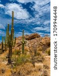 Saguaro National Park Is The...