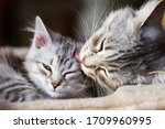 Adorable Kitten Licked And...