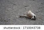 Dead Bird Lies On The Road.the...