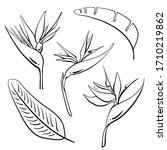 bird of paradise  strelitzia...   Shutterstock .eps vector #1710219862