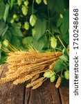 Small photo of Beer brewing ingredients. Hop and wheat ears on wooden rustic old table. Beer brewery concept. Hop cones and wheat closeup. Sack of hops and sheaf of wheat on vintage surface.