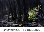 New Leaves Burst Forth From A...